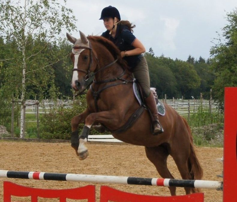 Frag' das Pferd:  Test für souveräne Führung Teil 2